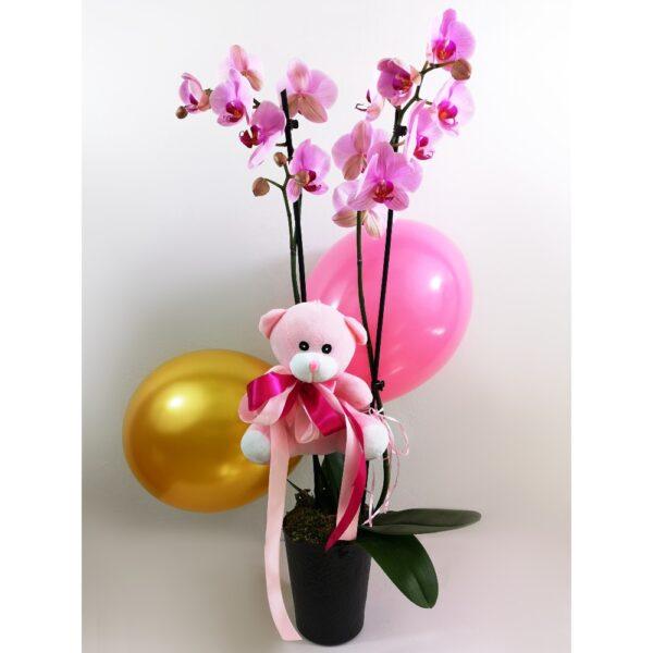 Ροζ Ορχιδέα Phalaenopsis για Κοριτσάκι