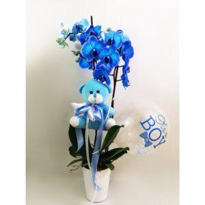 Μπλε Ορχιδέα Phalaenopsis για Αγοράκι