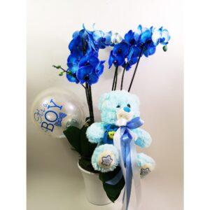 Double Μπλε Ορχιδέα Phalaenopsis για Αγοράκι