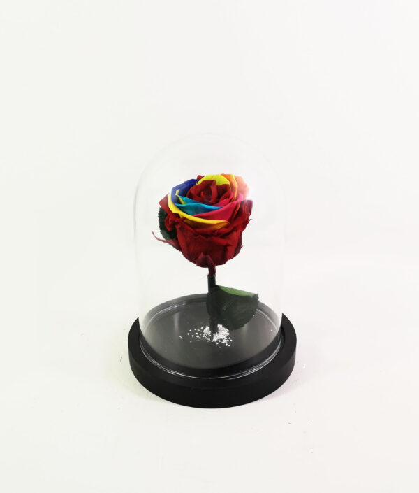 Real Rainbow Forever Rose